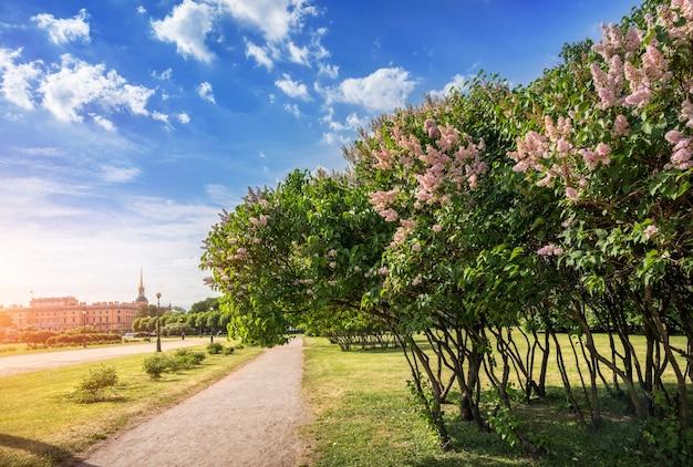 O campo marsovo em são petersburgo com vista para o castelo mikhailovsky e os arbustos de lilases rosa Foto Premium