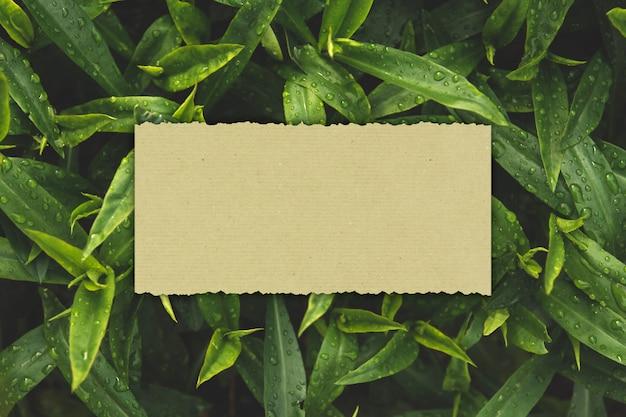 O cartão de papel em um fundo de folhas verdes molhadas copia o espaço. Foto Premium