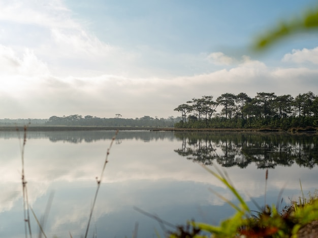 O cenário dos pântanos, pinheiros e do céu que reflete a superfície da água. Foto Premium