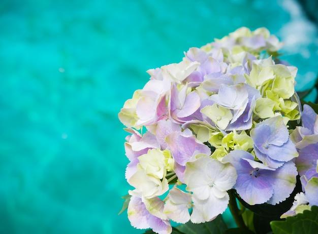 O centro da notícia branco roxo de paniculata da hortênsia floresce com fundo da água azul. Foto Premium