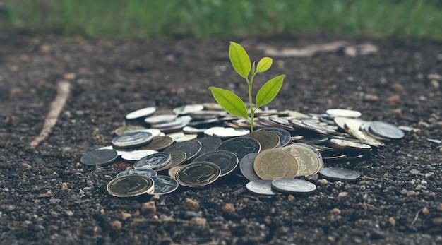 O conceito crescente do dinheiro, planta na pilha inventa na terra. tom vintage Foto Premium