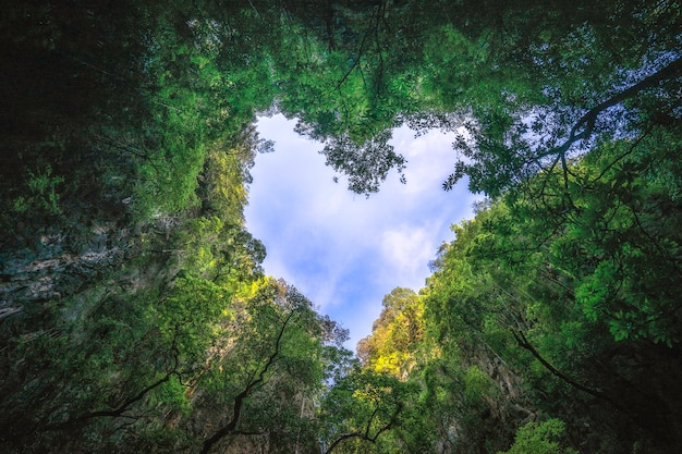 O coração deu forma à fotografia do céu na floresta tropical. fundo de natureza. Foto Premium