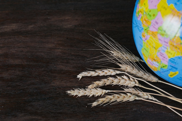 O dia mundial da alimentação, grãos de arroz e grãos de arroz descansando no chão de madeira marrom e globos simulados um ao lado do outro. Foto gratuita