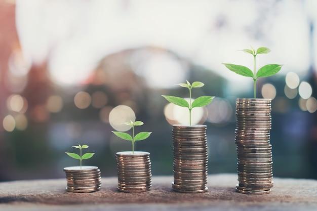 O dinheiro, planta na pilha inventa o conceito crescente e o sucesso financeiro dos objetivos. Foto Premium