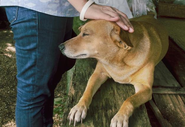 O dono acariciou a cabeça do cachorro com amor. Foto Premium