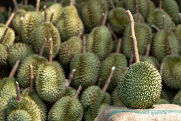 O durian sazonal está sendo vendido para traders para exportação para a china. Foto Premium