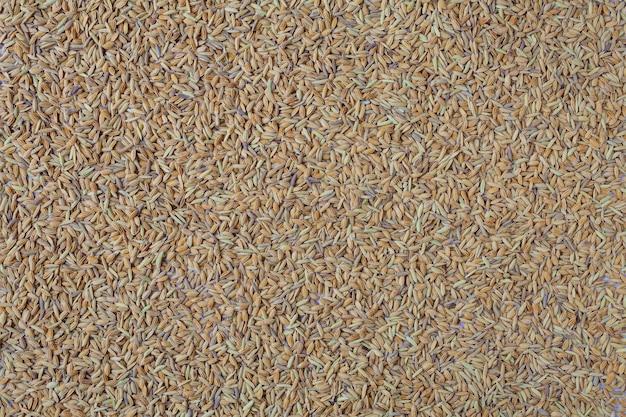 O está cheio de arroz. Foto gratuita