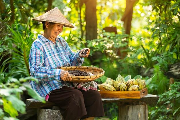 O fazendeiro asiático da mulher prende a fruta de cacau na caixa com um sorriso feliz. Foto Premium