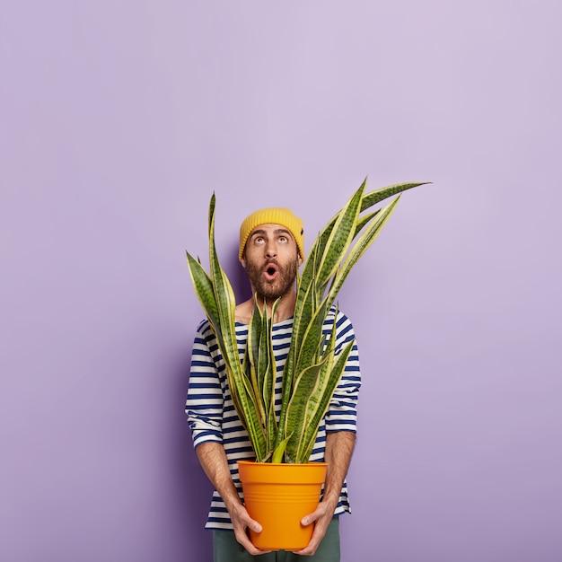 O florista surpreso com a barba por fazer usa um chapéu amarelo e um macacão listrado de marinheiro, focado para cima com um olhar inesperado, segurando um vaso com uma planta de sansevieria verde Foto gratuita