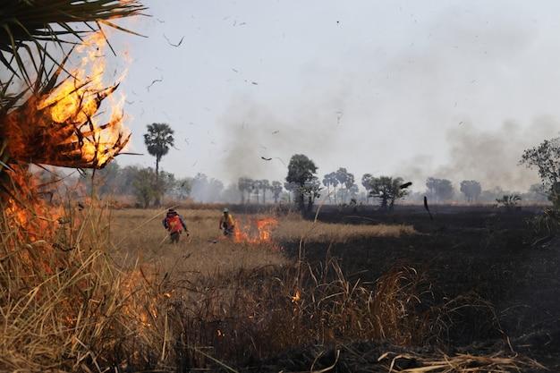 O fogo estava queimando nos campos e os policiais tentaram ajudar a apagar o fogo Foto Premium