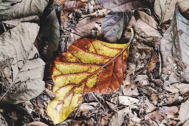 O fundo das folhas secas que caíram no chão Foto Premium