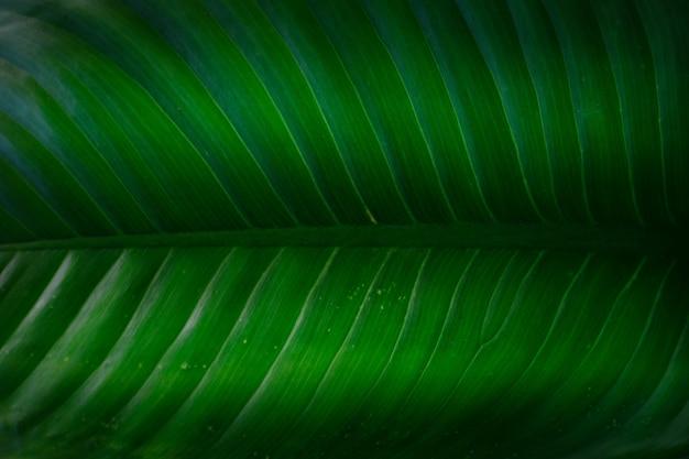 O fundo de padrão de folhas verdes Foto Premium