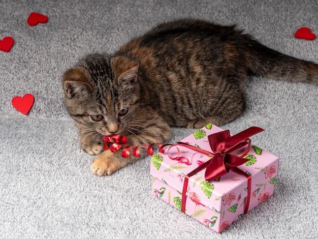 O gatinho cinza está deitado e brincando com uma fita vermelha de um presente rosa que está próximo Foto Premium