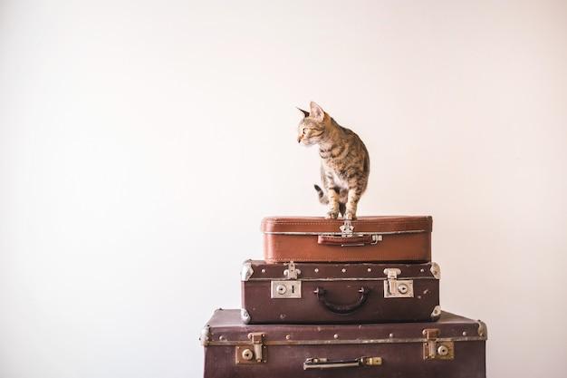 O gato curioso senta-se em malas de viagem do vintage contra o contexto de uma parede leve. Foto Premium