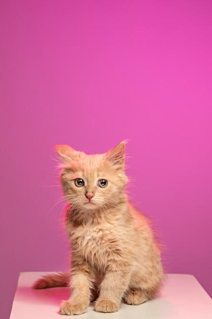 O gato em fundo branco Foto gratuita
