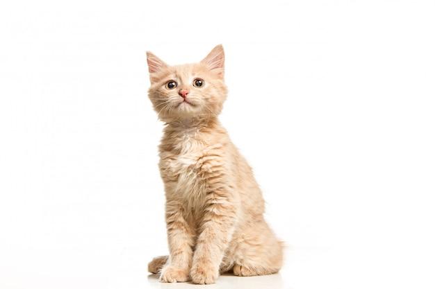 O gato na parede branca Foto gratuita