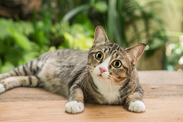 O gato no jardim está olhando para cima. Foto Premium