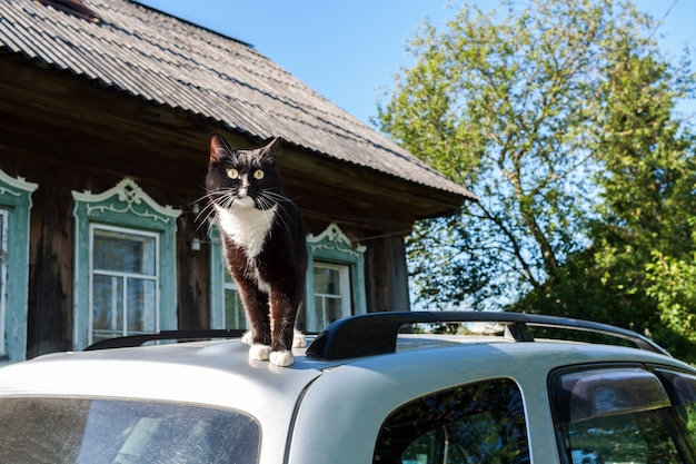 O gato preto e branco está no telhado do carro perto da casa da vila. Foto Premium