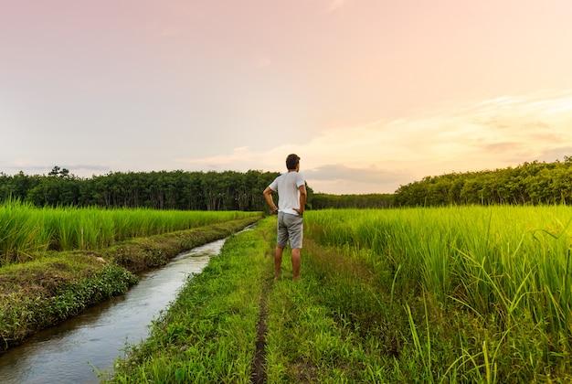 O homem olha para o campo de arroz com a cor do céu na luz de moning Foto Premium
