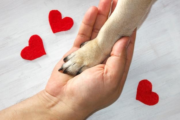 O homem prende a pata do cão com amor. corações vermelhos em fundo branco Foto Premium