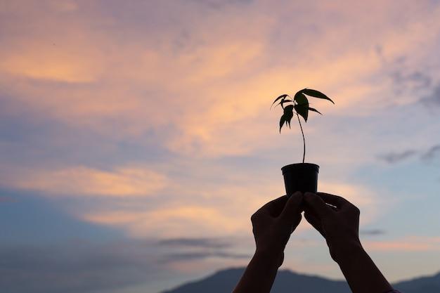 O jardineiro levanta o vaso da planta para o céu Foto gratuita