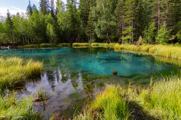O lago termal verde Foto Premium