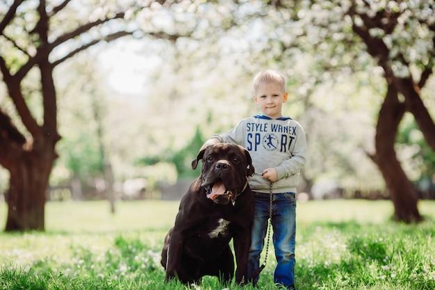 O menino simpático fica perto de cachorro no parque Foto gratuita