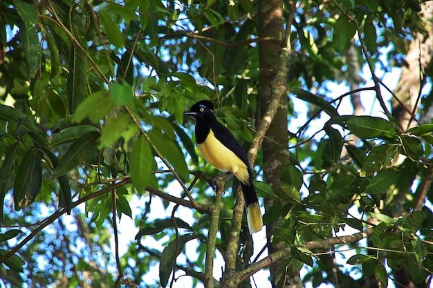 O pássaro no iguaçu cai no brasil Foto Premium