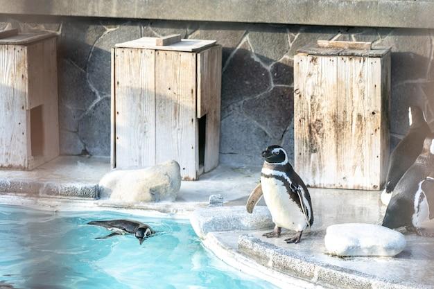 O pinguim aparece em um zoológico em uma cidade turística. Foto Premium