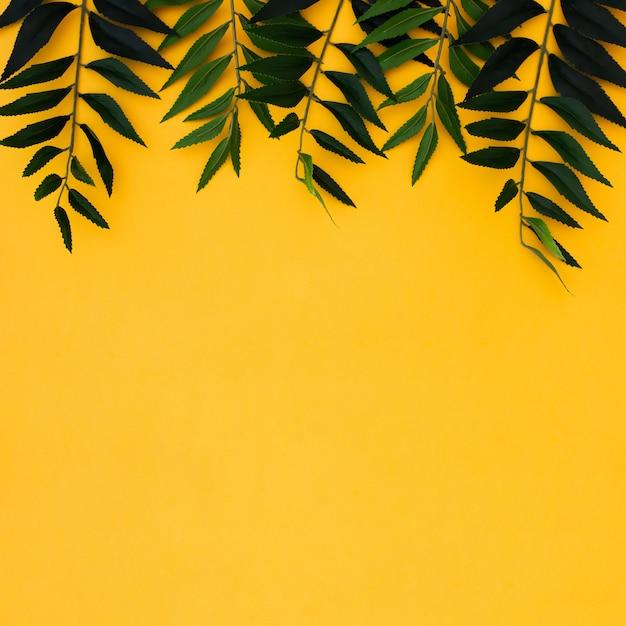 O plano coloca folhas de palmeira tropicais no fundo amarelo do espaço da cópia. conceito de verão Foto gratuita