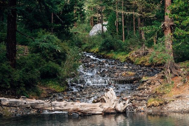 O riacho da montanha flui no lago no início da manhã. r Foto Premium