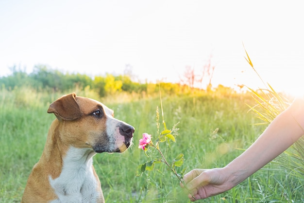 O ser humano dá um filhote de cachorro bonito para cheirar uma flor selvagem ao ar livre Foto Premium