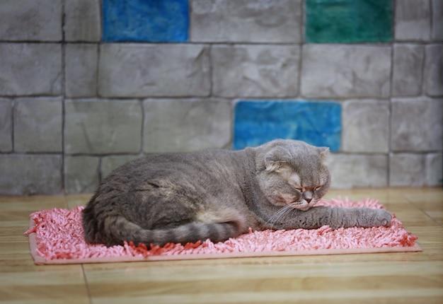 O shorthair americano cinzento surpreendeu os olhos grandes da cara engraçada do gato ou do gatinho que dormem no tapete cor-de-rosa. Foto Premium