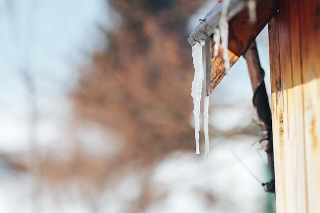 O sincelo da mola derrete na luz solar. pingentes de gelo bonitos Foto Premium