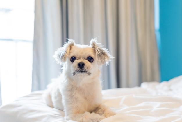 O sono do cão encontra-se na cama no quarto em casa ou no hotel Foto Premium