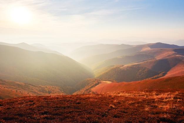 O verão modesto da vegetação das terras altas e cores invulgarmente bonitas florescem no outono, antes do tempo frio. blueberries vermelho brilhante, verde floresta de coníferas, laranja buk- montanhas sinie- charme fantástico. Foto gratuita