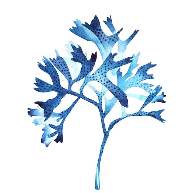 Objeto da vida marinha da alga isolado no fundo branco. aquarela mão desenhada ilustração pintada. Foto Premium