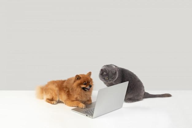 Olhe para este usuário moderno da rede spitz Foto Premium
