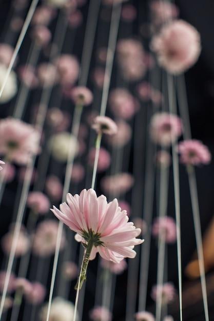 Olhe por baixo em fios com botões de flores cor-de-rosa Foto gratuita