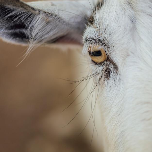 Olho de close-up de uma vaca Foto gratuita