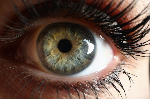 Olho verde humano supermacro closeup plano de fundo Foto Premium