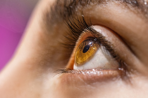 Olhos castanhos avelã Foto gratuita