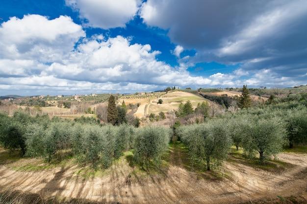 Olivais e vinhas no vale de chianti na toscana itália Foto Premium