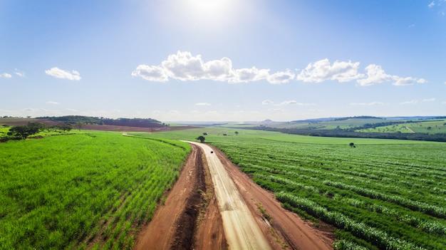Opinião aérea do campo da plantação da cana-de-açúcar com luz do sol. agrícola industrial. Foto Premium