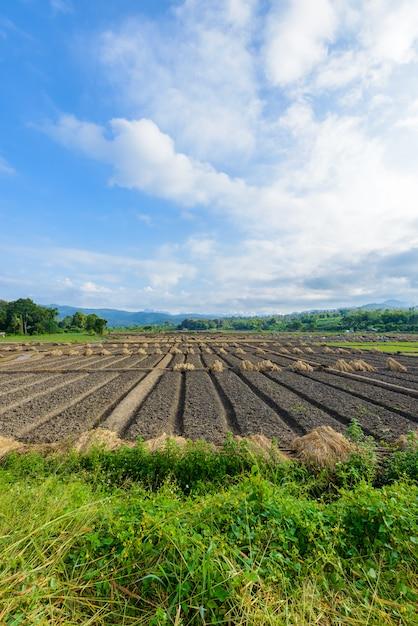 Opinião da paisagem de um vegetal recentemente crescente da agricultura Foto Premium