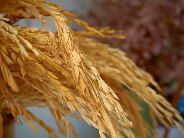 Orelhas do trigo em um vaso verde pastel colocado em uma tabela do pão do cozimento. fechar-se Foto Premium