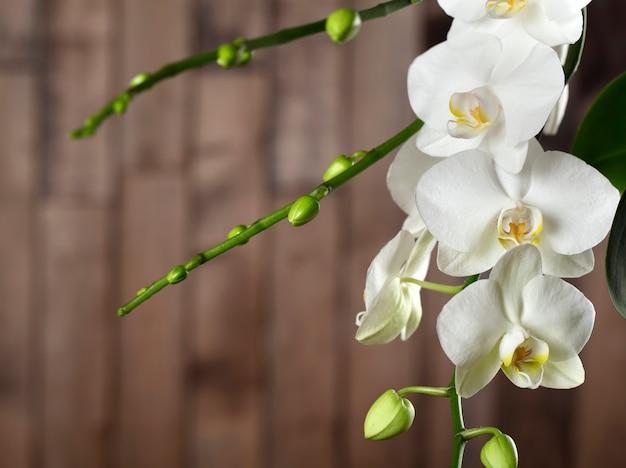 Orquídea branca Foto Premium
