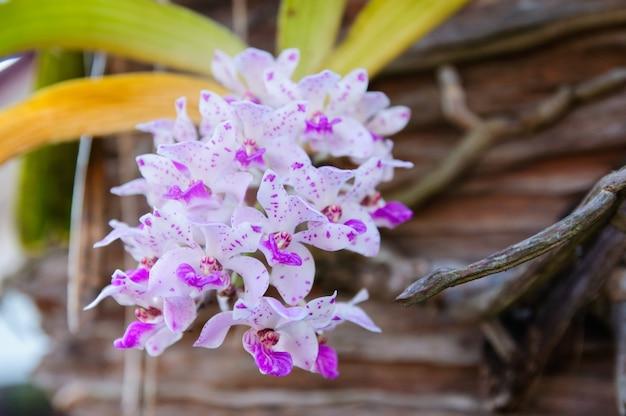 Orquídea roxa bonita Foto Premium