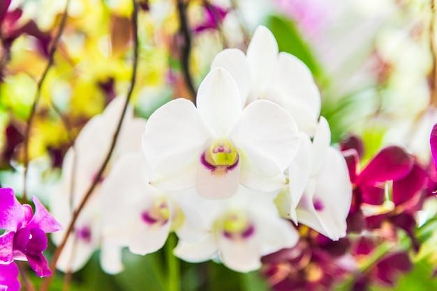 Orquídea Foto gratuita