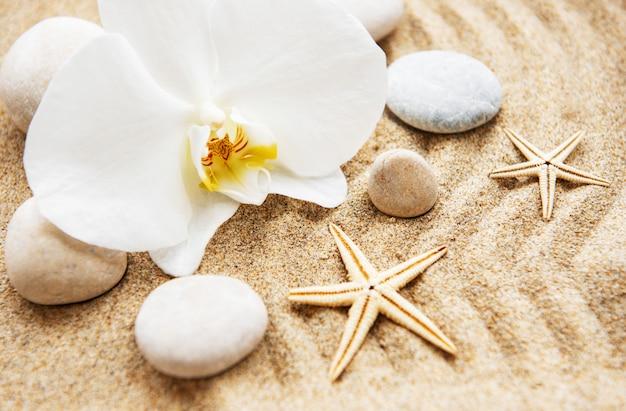 Orquídeas e pedras Foto Premium